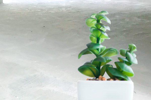 KRYS_ecological